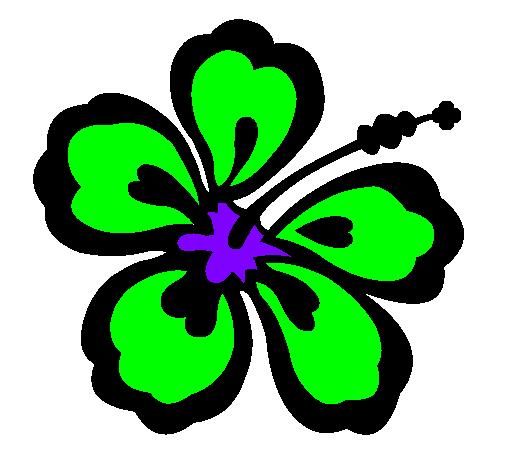 Dessin De Fleur Hawaienne Colorie Par Membre Non Inscrit Le 14 De