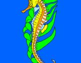 Coloriage Cheval de mer oriental colorié par MELODIE