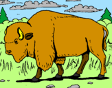Coloriage Buffalo colorié par angelo