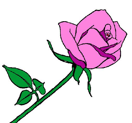 dessin de rose colorie par membre non inscrit le 02 de août de