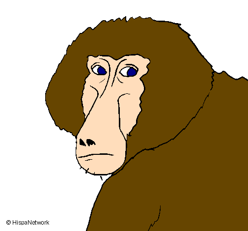 Dessin de babouin colorie par membre non inscrit le 13 de - Dessin de babouin ...