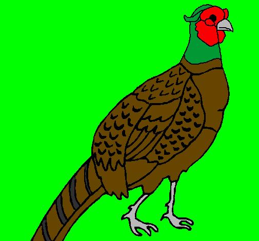 dessin de faisan colorie par membre non inscrit le 20 de septembre de 2011 224 coloritou