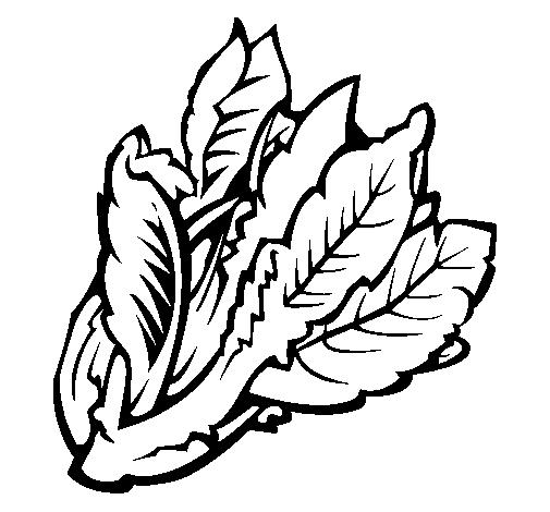Dessin De Salade Ii Colorie Par Membre Non Inscrit Le 29 De
