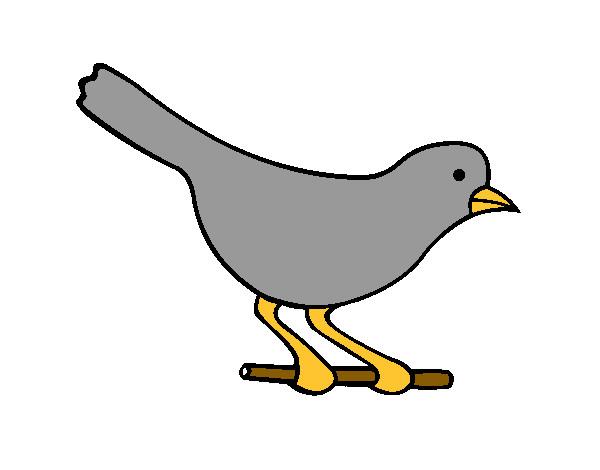 Dessin de un oiseau colorie par titi2010 le 24 de f vrier - Un oiseau dessin ...