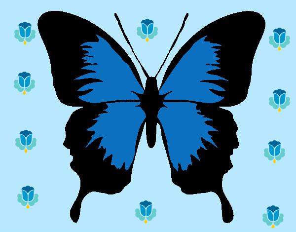 Aile De Papillon Dessin dessin de papillon à ailes noires colorie par estella le 04 de