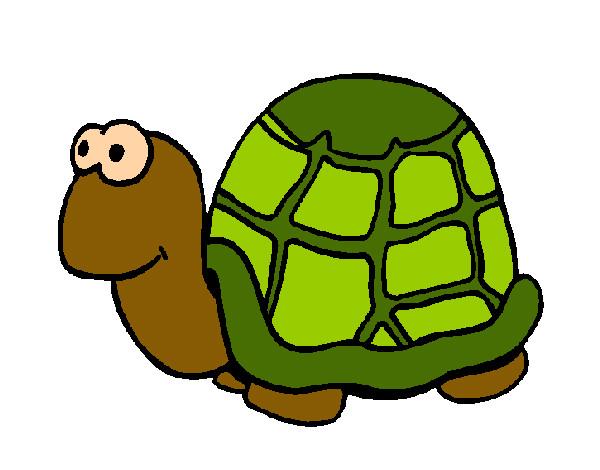Dessin de tortue colorie par camille le 12 de f vrier de 2013 - Tortue en dessin ...