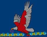 Coloriage Aigle en vol colorié par rrastoul