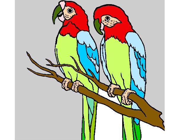 Dessin de perroquets colorie par heloise le 12 de avril de - Dessins de perroquets ...