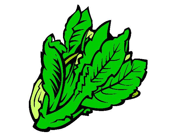 Dessin De Salade Ii Colorie Par Tim78 Le 14 De Janvier De