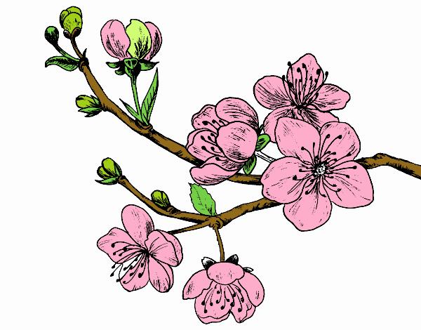 Dessin de branche de cerisier colorie par membre non inscrit le 02 de mai de 2015 - Cerisier en fleur dessin ...