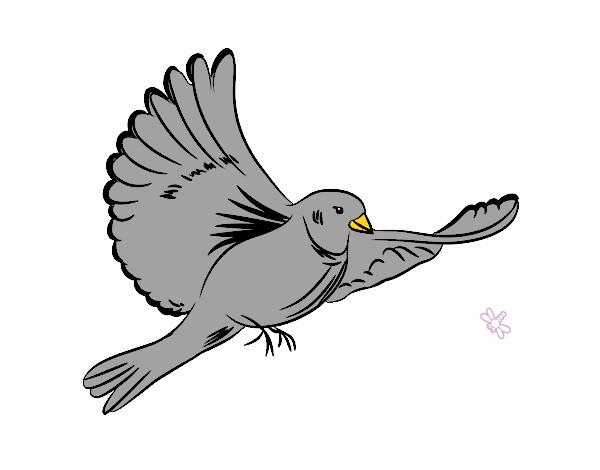 Dessin de colombe blanche - Colombe en dessin ...