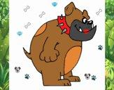 Bulldog anglais