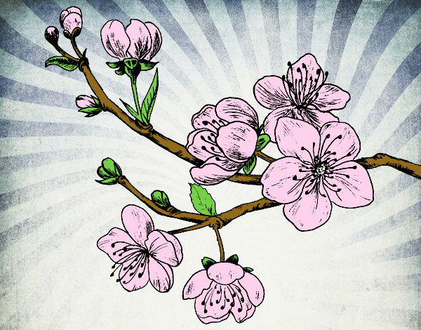 Dessin de branche de cerisier colorie par capucine le 06 de novembre de 2015 - Coloriage fleur capucine ...