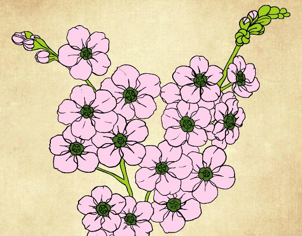 Dessin de fleur de cerisier colorie par capucine le 06 de novembre de 2015 - Coloriage fleur capucine ...