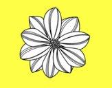 Fleur en marguerite