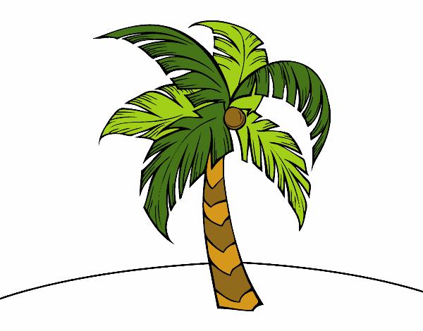 Dessin de une palmier colorie par membre non inscrit le 06 de d cembre de 2015 - Dessin palmier ...