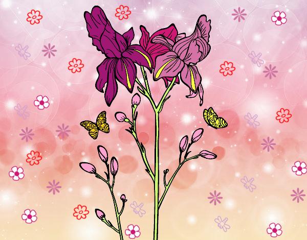 Dessin de fleur des iris colorie par membre non inscrit le 19 de d cembre de 2015 - Coloriage fleur iris ...