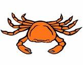 Coloriage Crabe de mer colorié par SAdiane