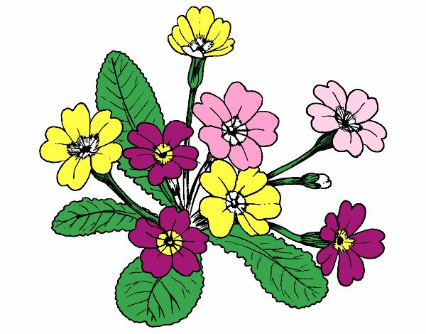 Dessin de primev re colorie par membre non inscrit le 10 de f vrier de 2016 - Dessin de tulipe a imprimer ...