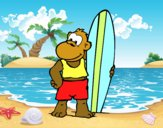 Singe surfer