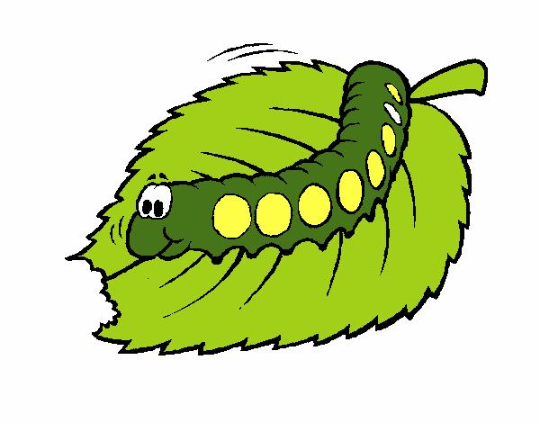 Dessin de chenille qui mange colorie par membre non - Rosier mange par des chenilles ...