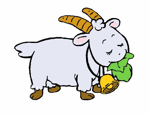 Chèvre 5