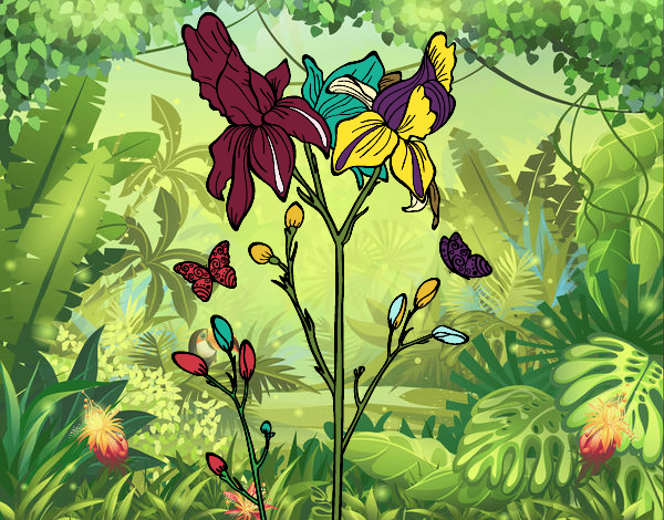 Dessin de fleur des iris colorie par membre non inscrit le 19 de juin de 2016 - Coloriage fleur iris ...
