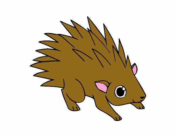 Un hérisson