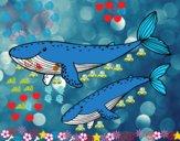 Coloriage Baleines colorié par damien