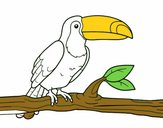 Un toucan