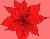 Fleur en poinsettia
