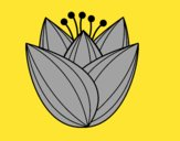 Fleur de tulipa