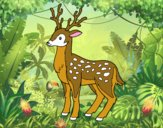 Un jeune cerf