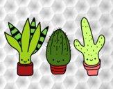 Mini cactus