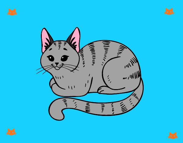 Chat de jeune
