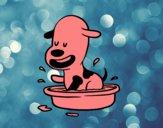 Un petit chien dans la baignoire