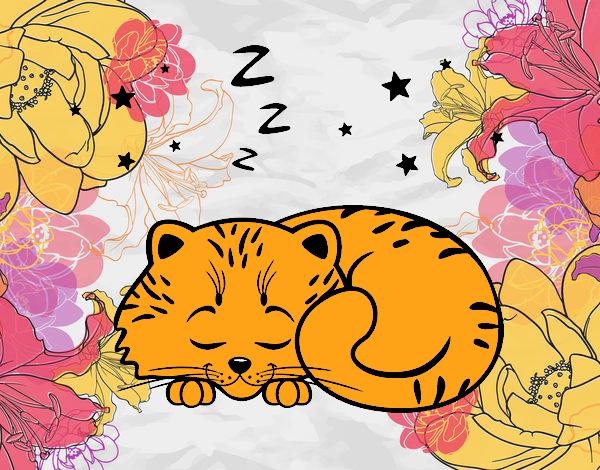Chaton sommeil