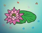 Une fleur de lotus