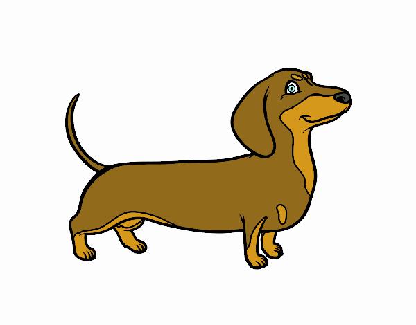 Dessin de chien teckel colorie par membre non inscrit le - Dessin teckel ...