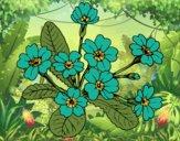 Coloriage Primevère colorié par Vickee