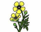 Fleur bouton d'or