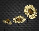 Coloriage Fleur de camomille colorié par KAKE2