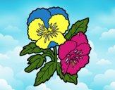 Coloriage Fleurs de pensée colorié par Danco17