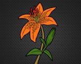 Coloriage Lilium candidum colorié par KAKE2