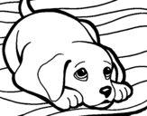 Petit chien sur le tapis
