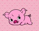 Bébé cochon