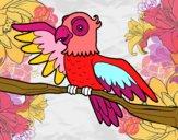 Perroquet en liberté