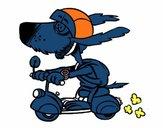 Chien motard