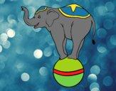 Éléphant équilibriste
