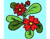 Fleurs 4a